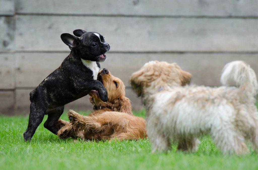 Jeux pour stimuler un chien