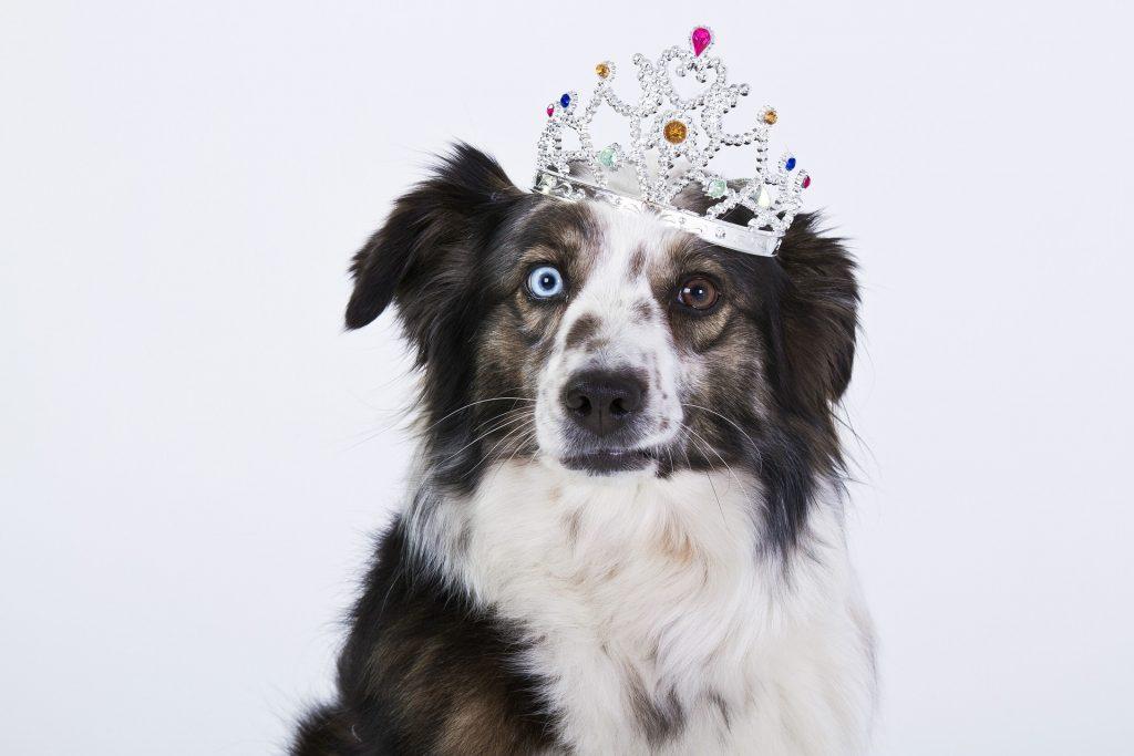 la vue chez les chiens