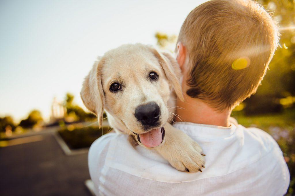 Assurance mutuelle chien