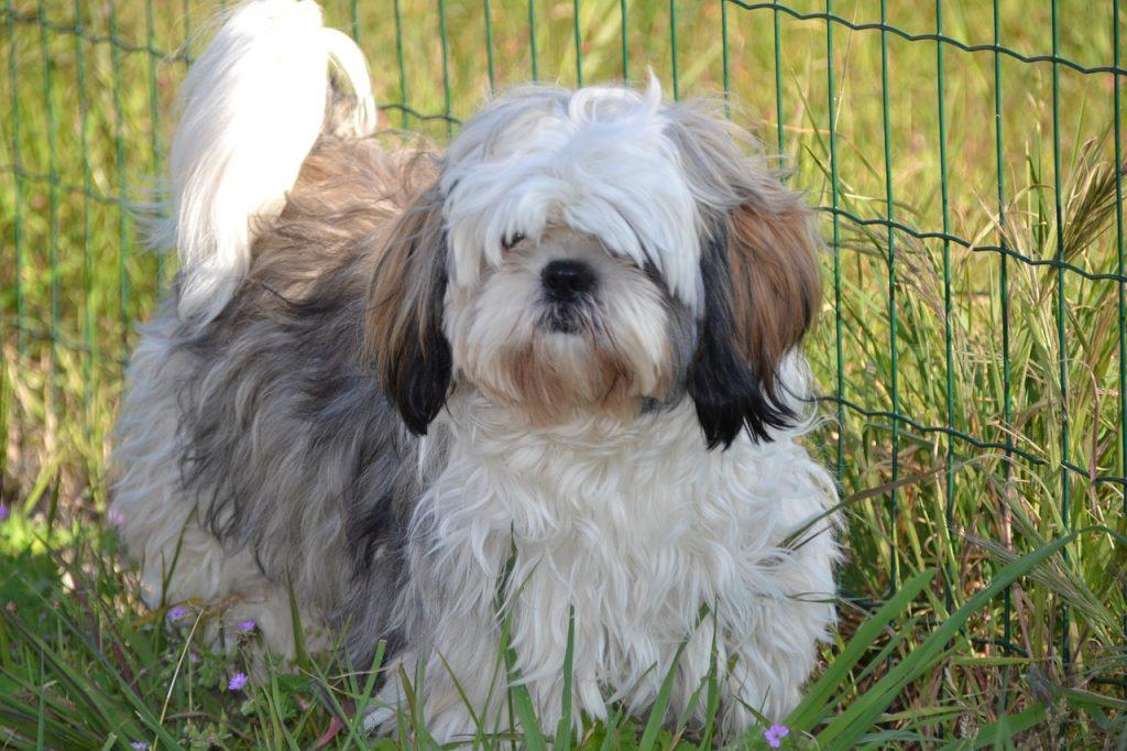 Tondeuses à poils pour chiens