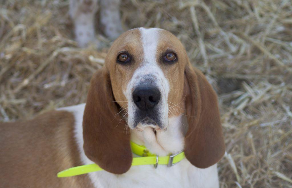 Collier anti parasitaires chien