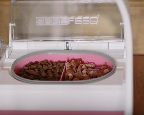 Distributeur automatique pour animaux chat chien sure feed