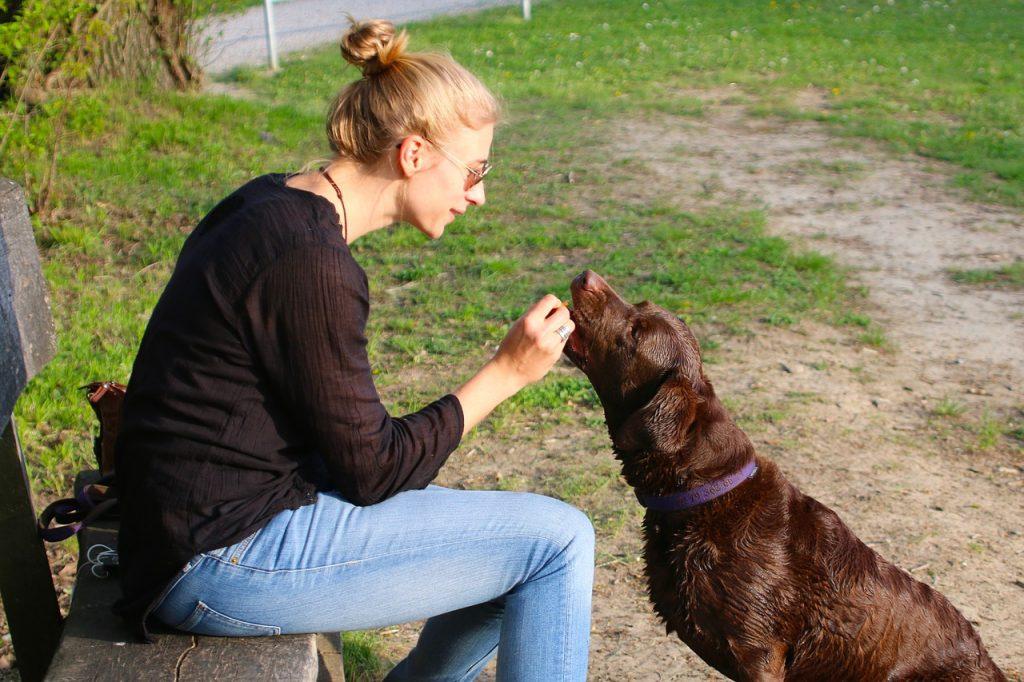 Dressage clicker chien