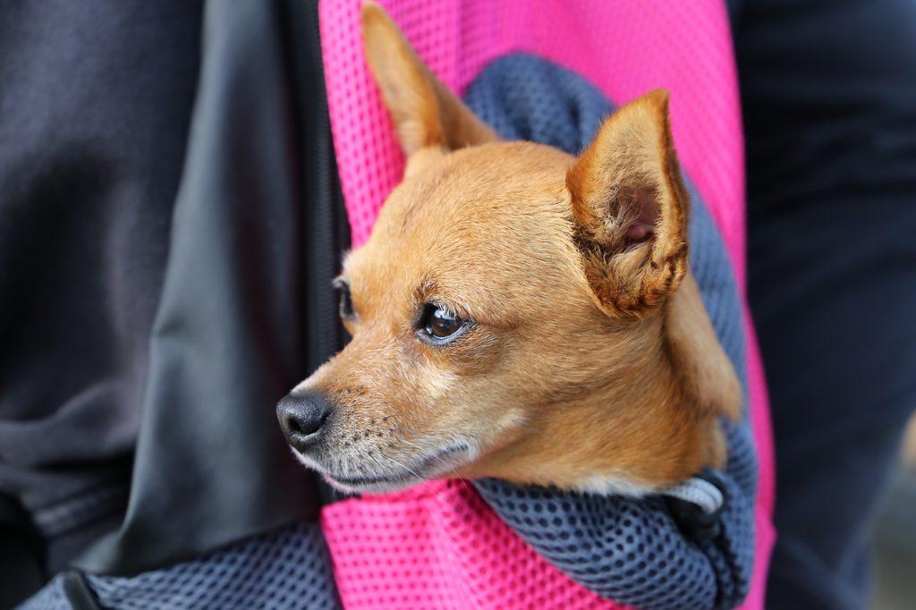 Meilleur sac a main transport pour chiens