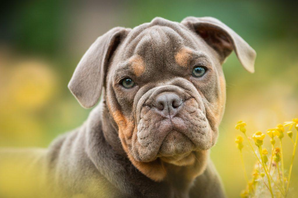 Traitement parasitaire contre les vers chien
