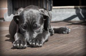 Les meilleurs traitements contre les vers chez le chien