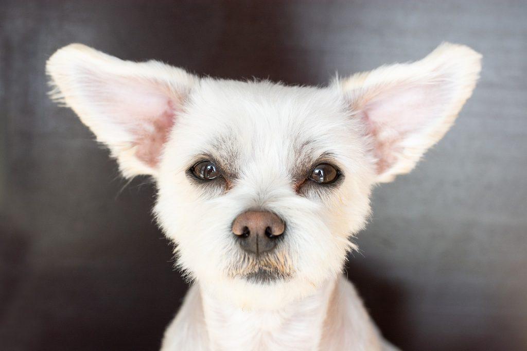 Eduquer un chien sourd