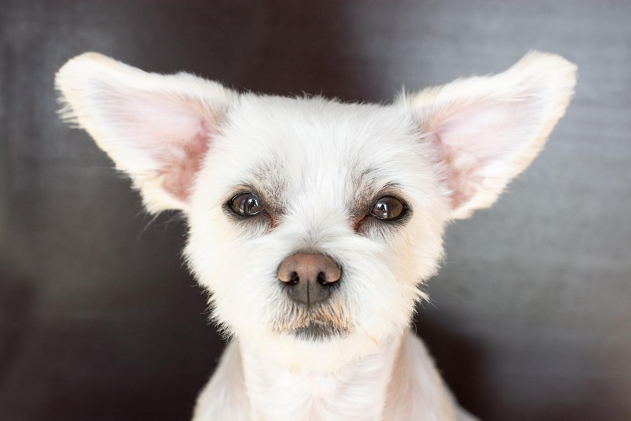 collier pour chien sourd