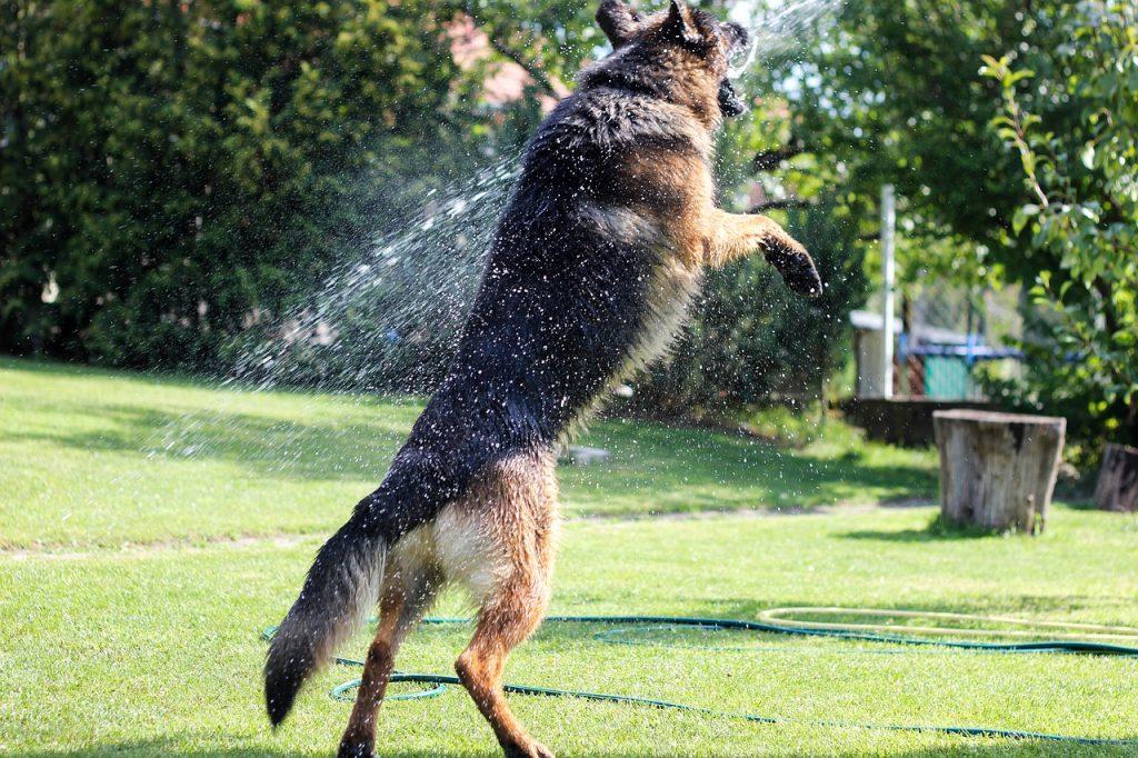 Arthrite chien glucosamine