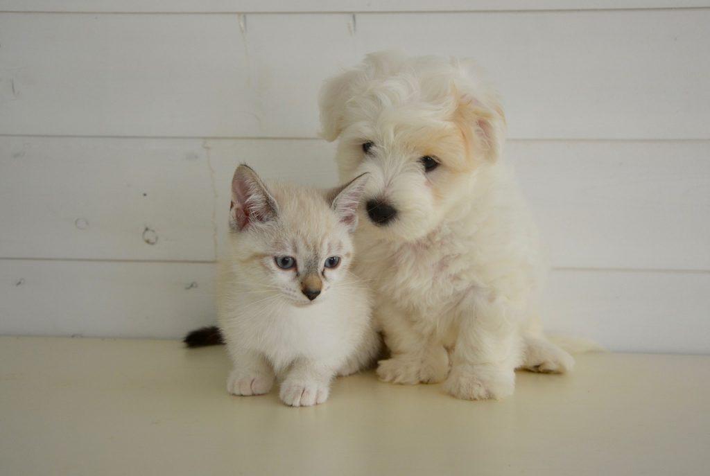 Assurance sante animaux