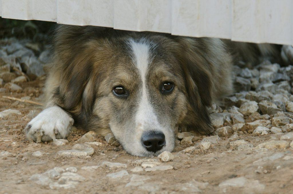 Diarrhées chiens