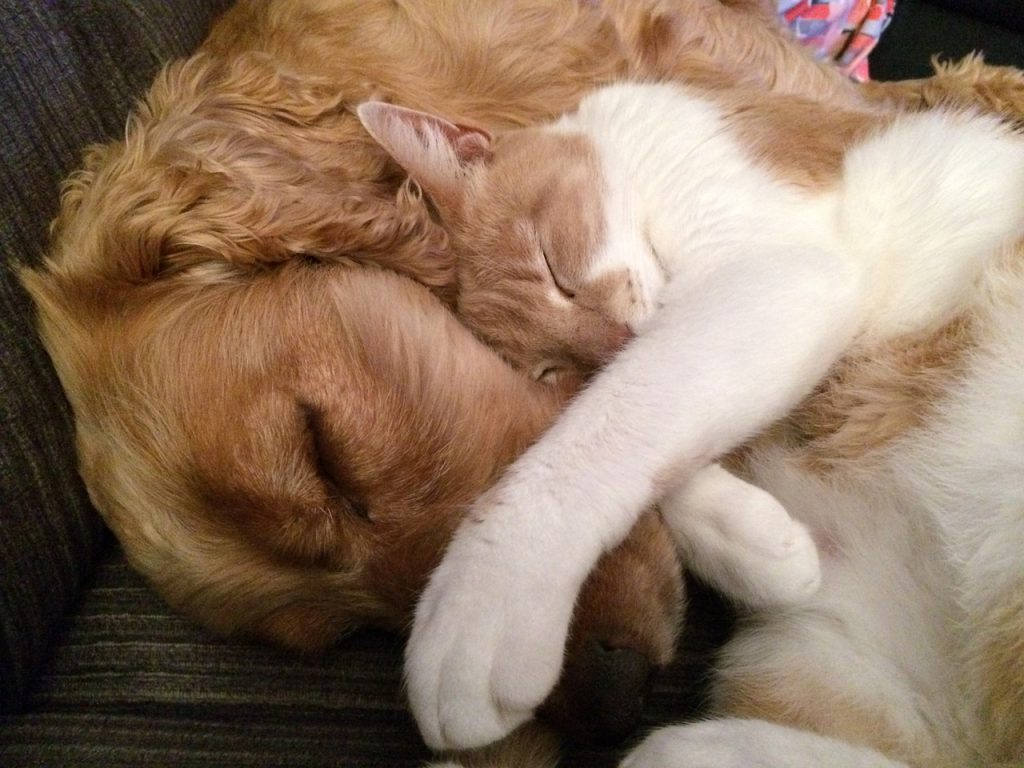 Mutuelle animaux chiens chats