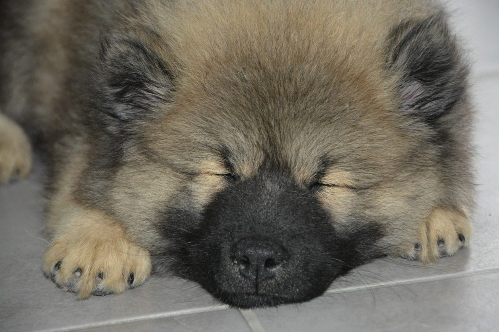 Sommeil et rêves des chiens