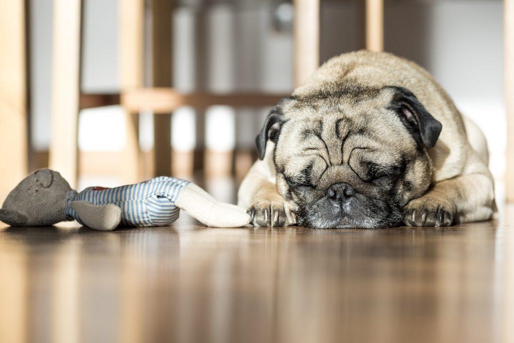 Un chien dort beaucoup
