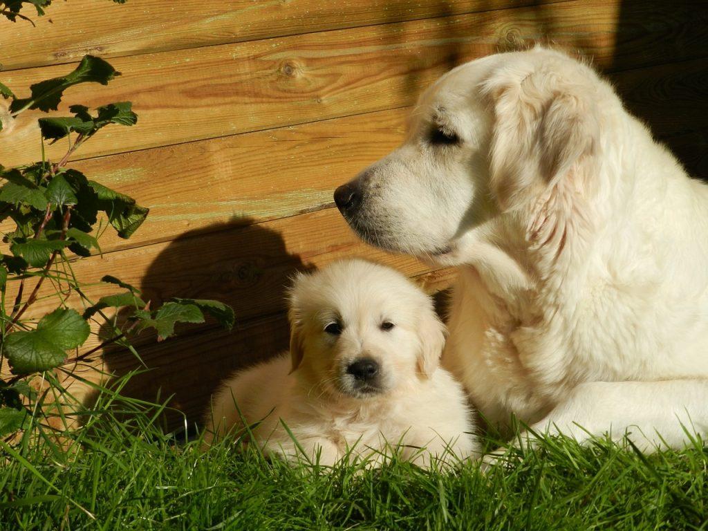 Un chiot et sa maman
