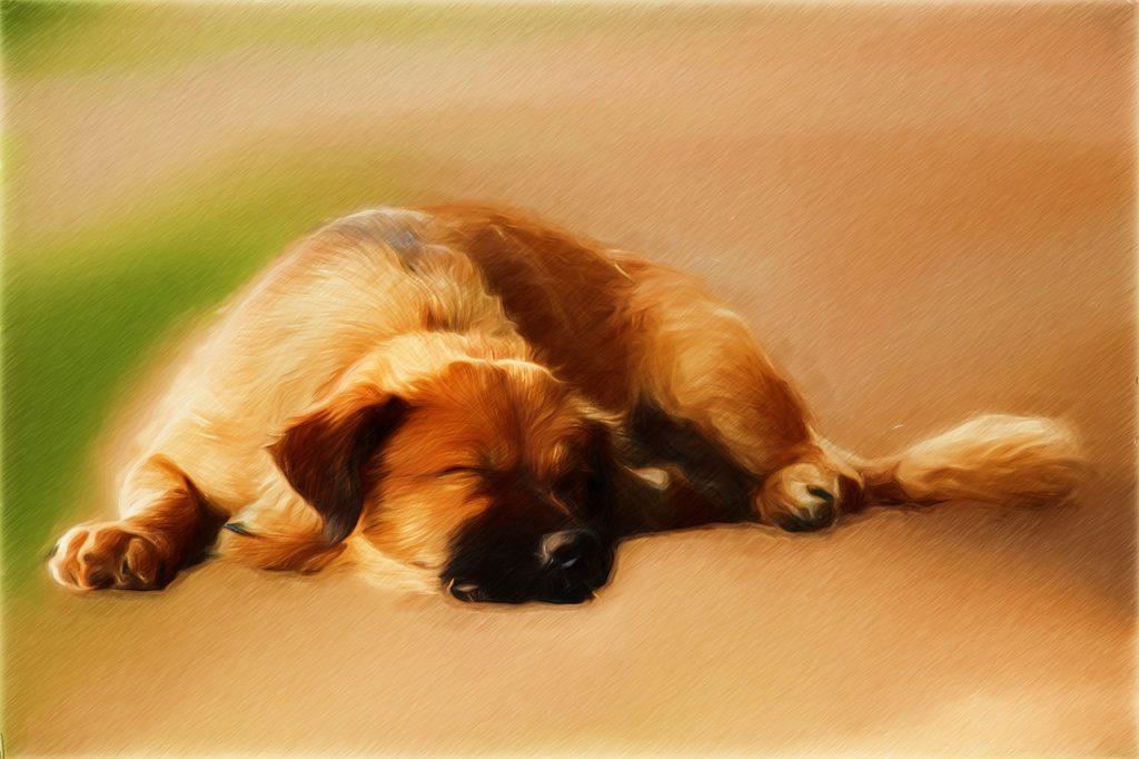 Les-chiens-rêvent-ils ?