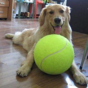 Jouet balle de tennis géante pour chien